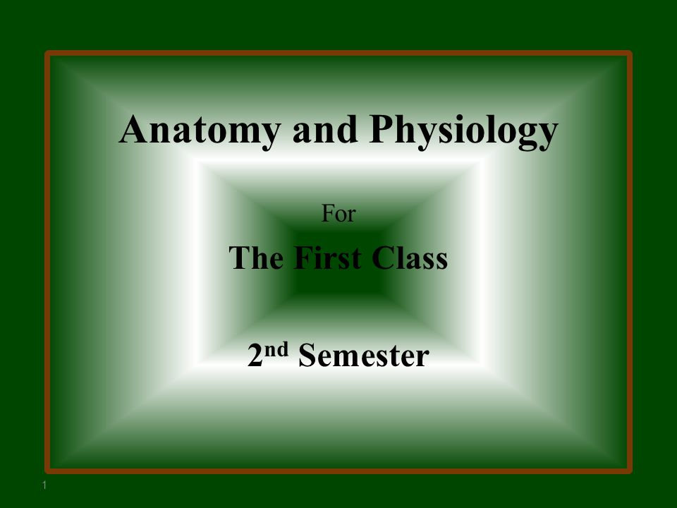 Anatomy and Physiology For The First Class 2 nd Semester ppt download