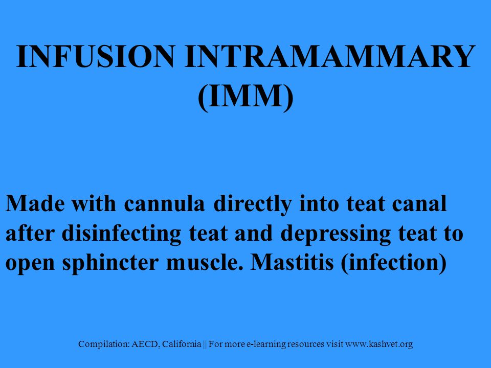 INFUSION INTRAMAMMARY (IMM) Made with cannula directly into teat canal after disinfecting teat and depressing teat to open sphincter muscle.