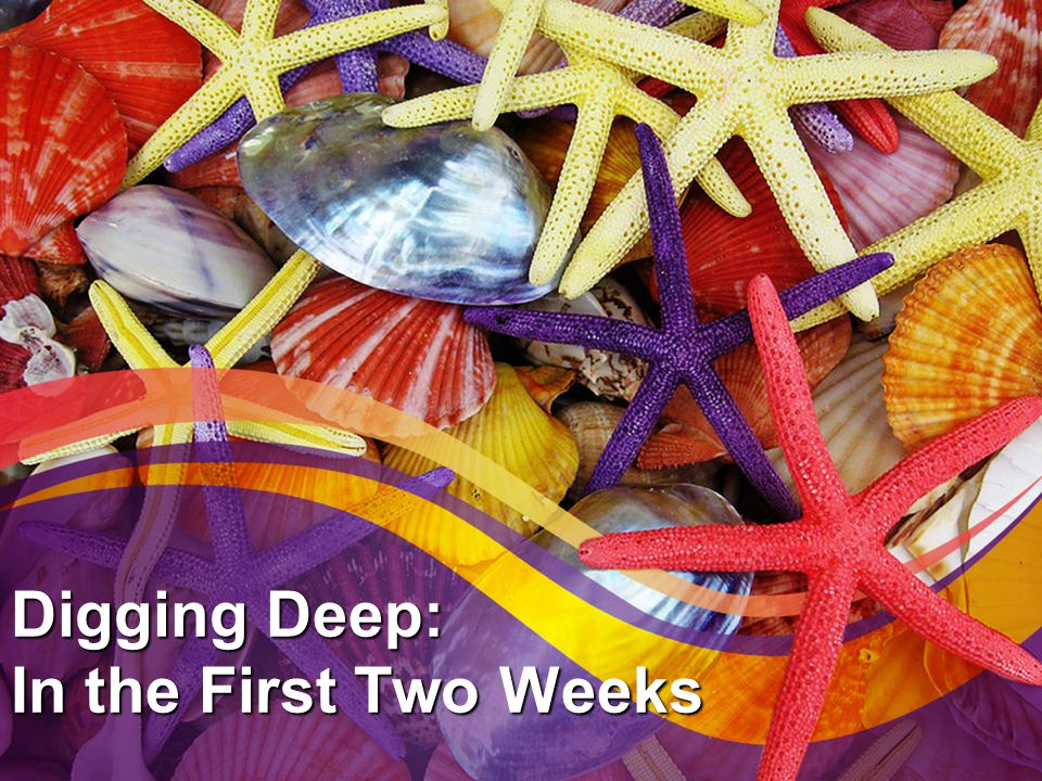 Digging Deep: In the First Two Weeks