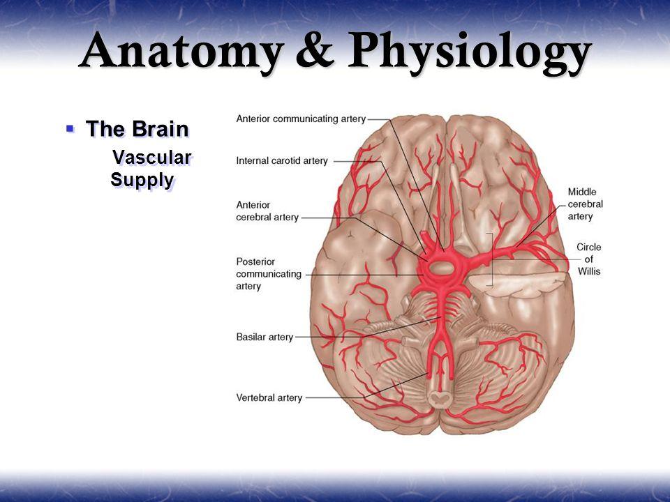 Neurology. Sections  Anatomy & Physiology  Pathophysiology ...