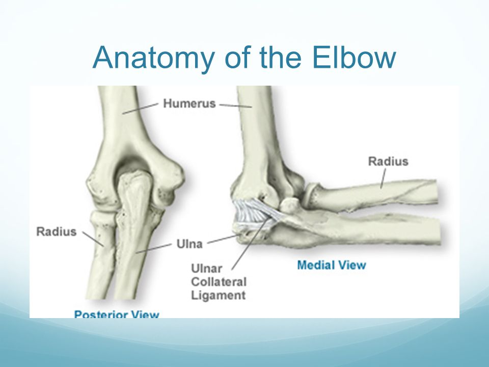 Elbow Injuries Ulnar Collateral Ligament Tear, Tendonitis. - ppt ...