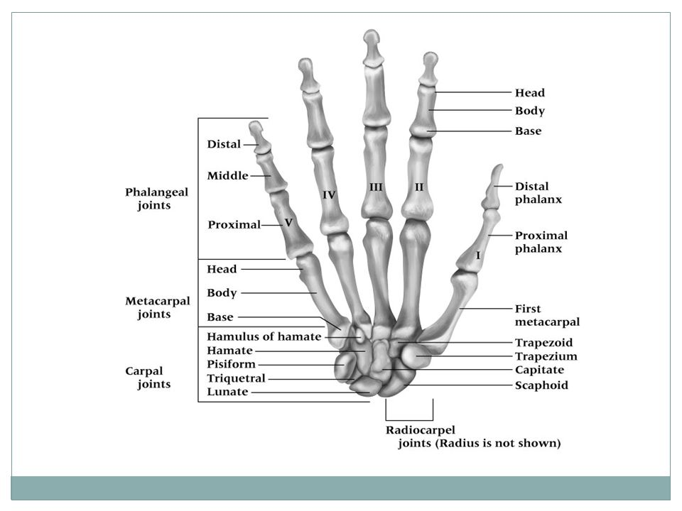 Wrist And Hand Ppt Video Online Download