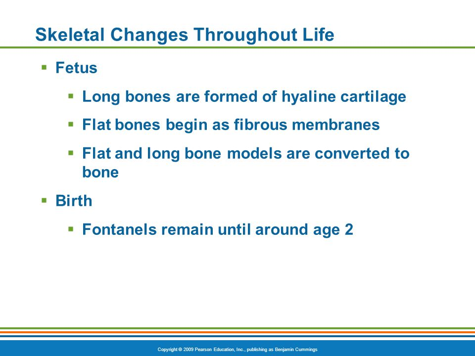 Copyright © 2009 Pearson Education, Inc., publishing as Benjamin Cummings Skeletal Changes Throughout Life  Fetus  Long bones are formed of hyaline cartilage  Flat bones begin as fibrous membranes  Flat and long bone models are converted to bone  Birth  Fontanels remain until around age 2