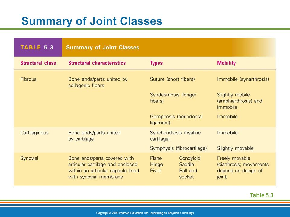 Copyright © 2009 Pearson Education, Inc., publishing as Benjamin Cummings Summary of Joint Classes [Insert Table 5.3 here] Table 5.3