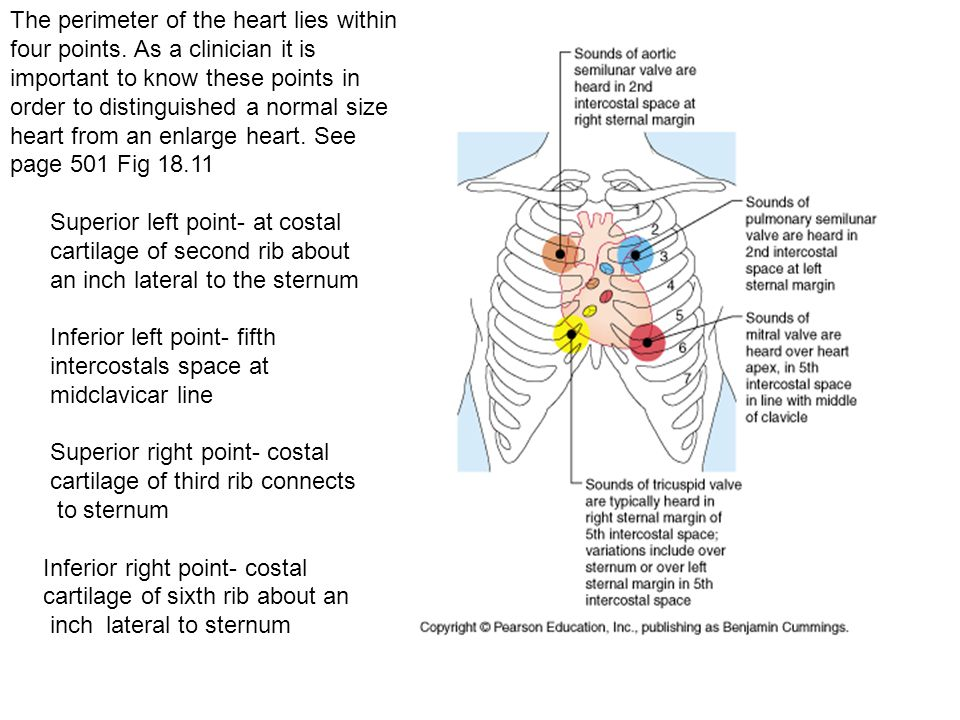 The Heart Chapter 18 Anatomy 32. Emotions do not come from the heart ...