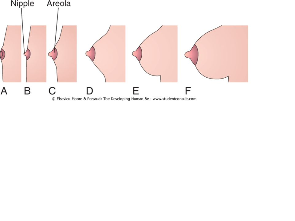 Breast development areole