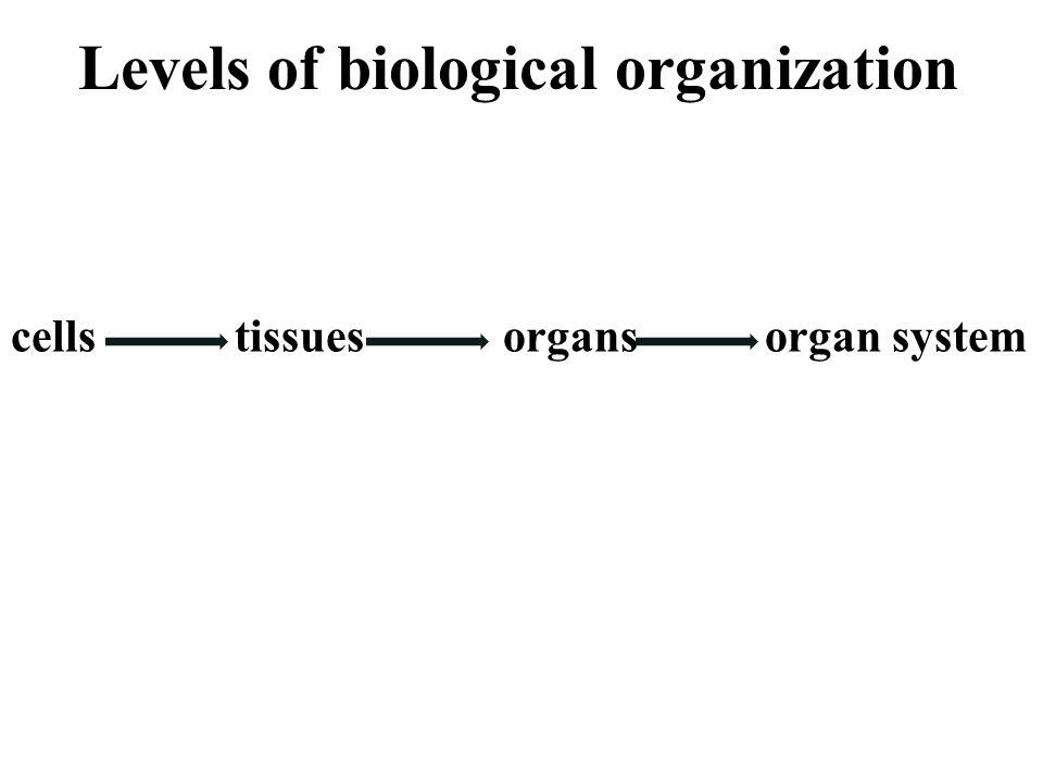 Animal Organization. Levels of biological organization cells tissues ...