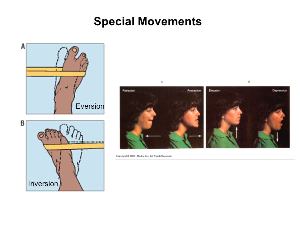 Special Movements Inversion Eversion