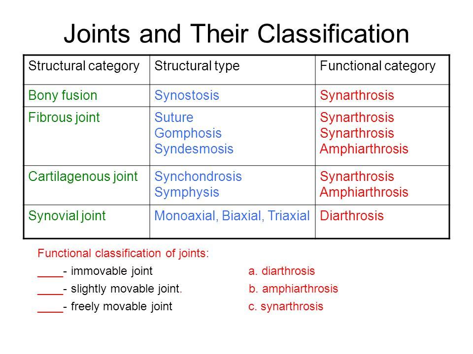 Synchondrosis Vs Synarthrosis – Start studying synchondrosis, syndesmosis, synarthrosis, synostosis.