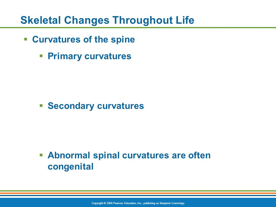 Copyright © 2009 Pearson Education, Inc., publishing as Benjamin Cummings Skeletal Changes Throughout Life  Curvatures of the spine  Primary curvatures  Secondary curvatures  Abnormal spinal curvatures are often congenital