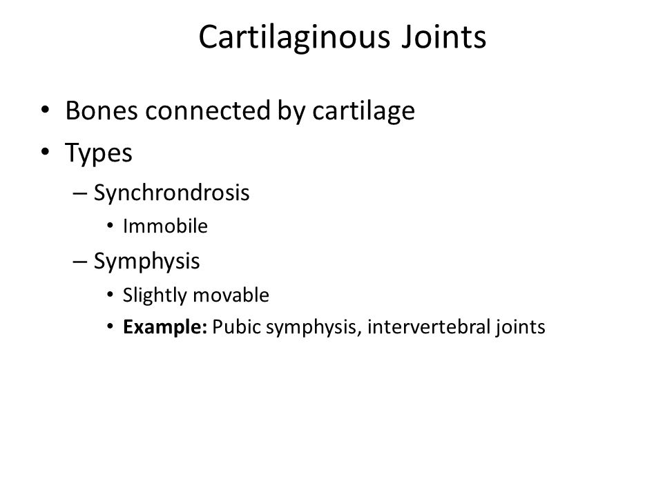 Cartilaginous Joints Bones connected by cartilage Types – Synchrondrosis Immobile – Symphysis Slightly movable Example: Pubic symphysis, intervertebral joints