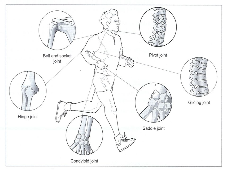 JOINTS. What is a Joint? Write a definition to explain what ...