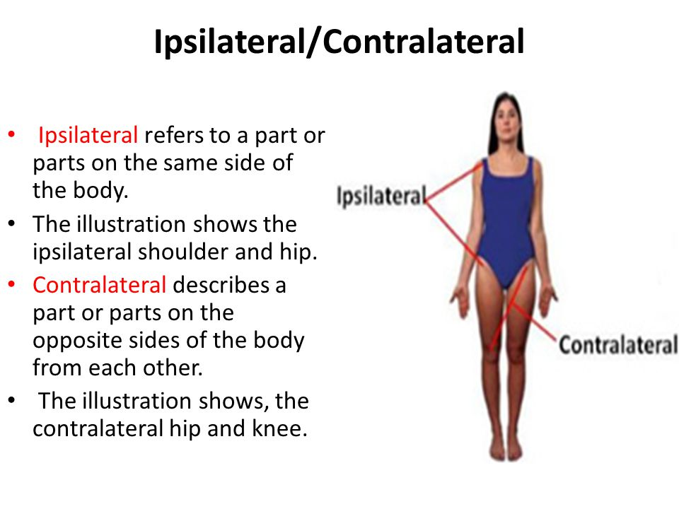 Luxury What Does Ipsilateral Mean In Anatomy Crest Anatomy And