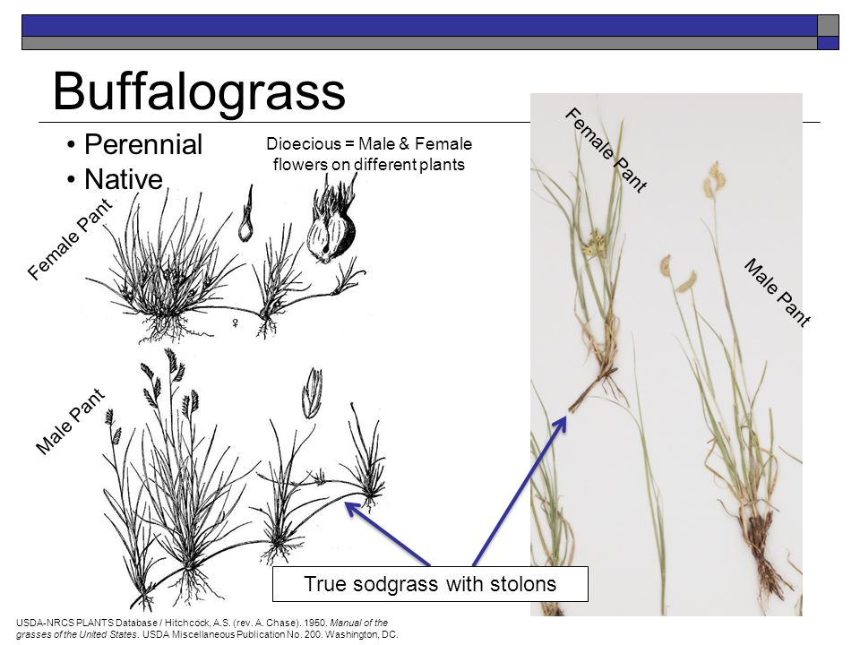Grasses and Grass-like Plants 25 Major Rangeland Plants By