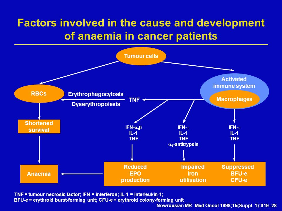 Shortened survival Factors involved in the cause and development of anaemia in cancer patients Tumour cells RBCs Activated immune system Macrophages TNF Anaemia IFN- ,  IFN-  IFN-  IL-1IL-1IL-1 TNFTNFTNF  1 -antitrypsin ReducedImpairedSuppressed EPOironBFU-e productionutilisationCFU-e Nowrousian MR.
