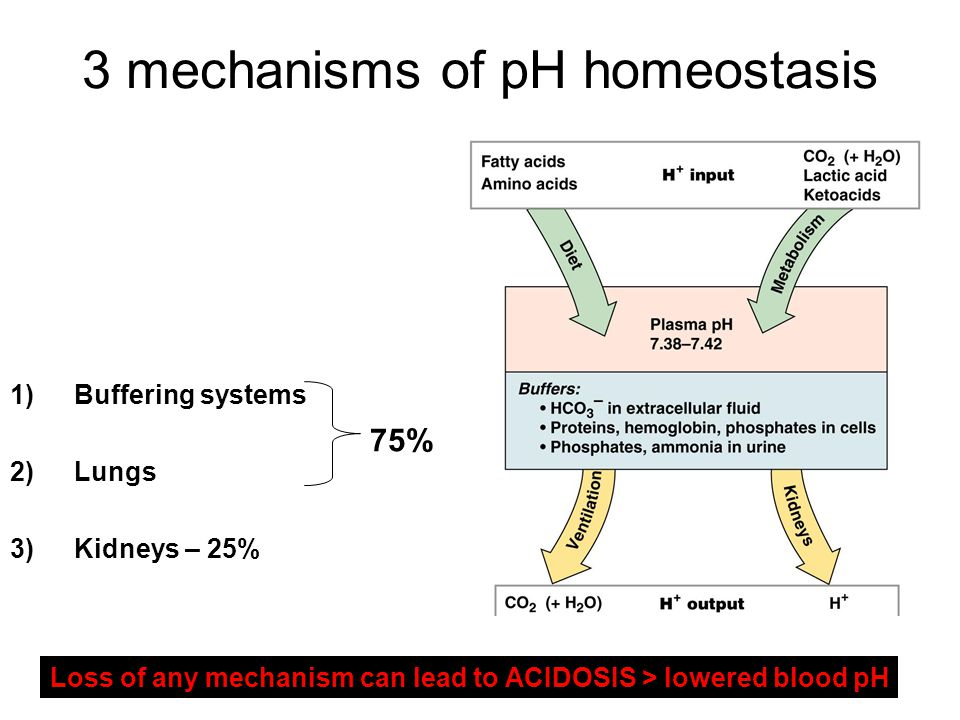 3 mechanisms of pH homeostasis 1)Buffering systems 2)Lungs 3)Kidneys – 25% 75% Loss of any mechanism can lead to ACIDOSIS > lowered blood pH