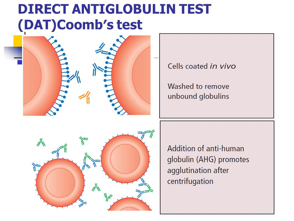 DIRECT ANTIGLOBULIN TEST (DAT)Coomb′s test