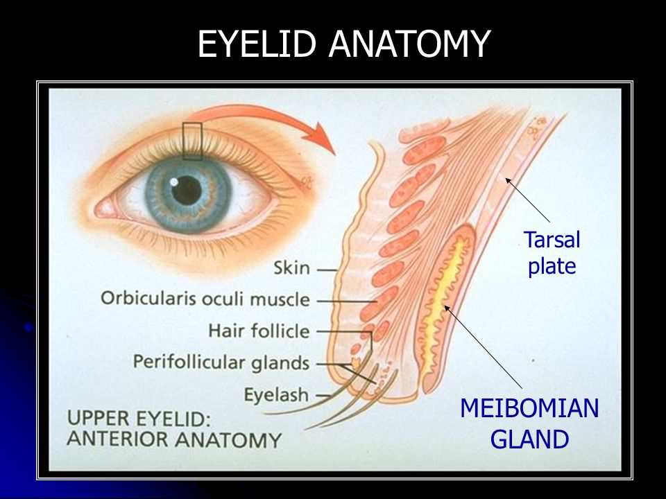 RED EYE AND OCULAR TRAUMA DEPARTMENT OF OPHTHALMOLOGY UNIVERSITY OF ...