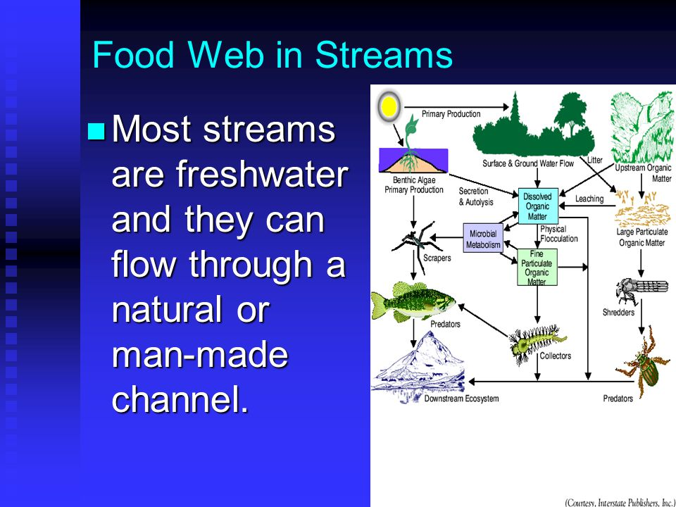 Food Web in Streams Most streams are freshwater and they can flow through a natural or man-made channel.