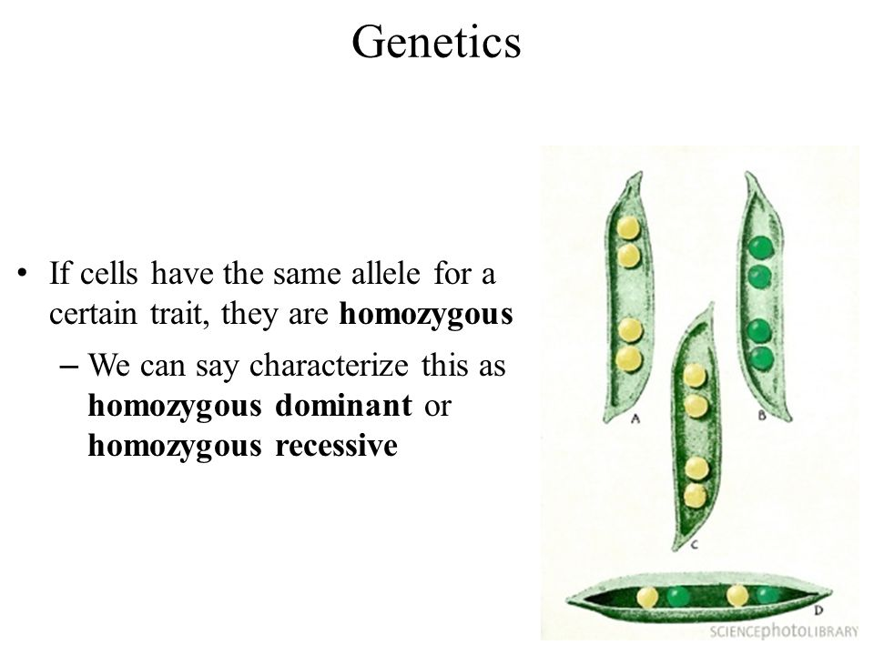 basic elements of genetics by jane horlings. genetics the alternate