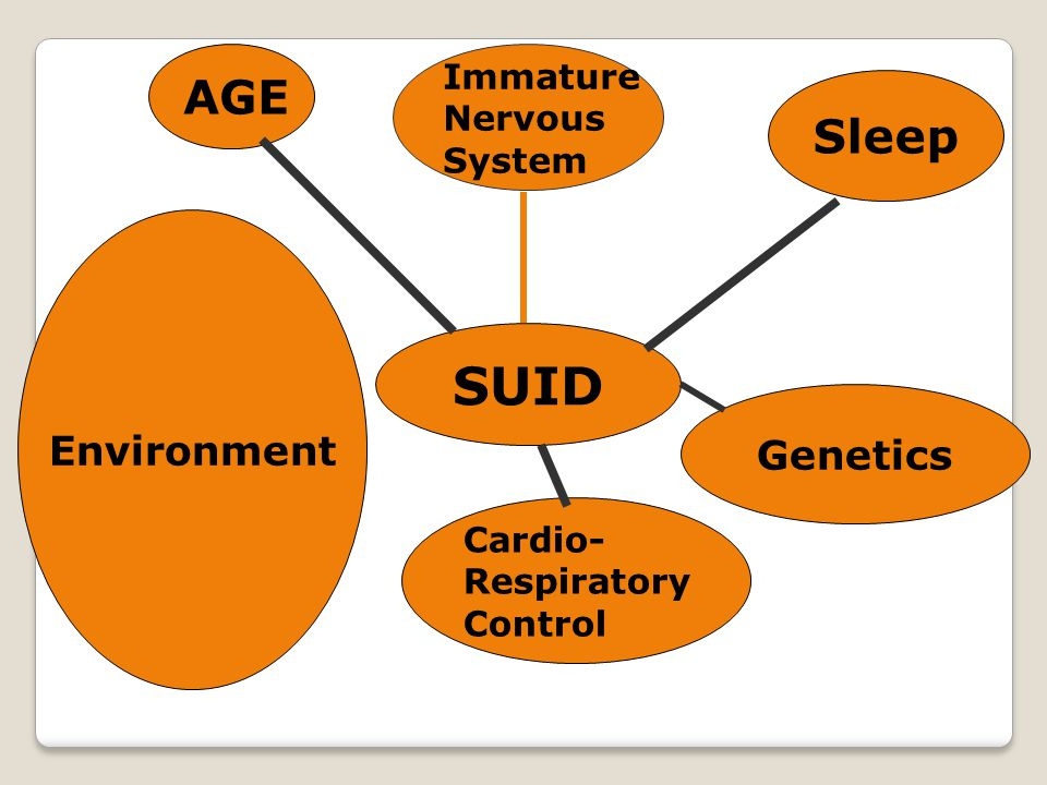 SUID AGE Immature Nervous System Sleep Cardio- Respiratory Control Environment Genetics