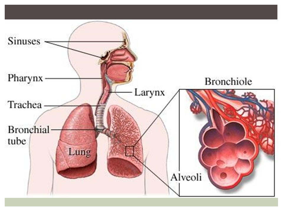 Circulatory system 6th grade health ppt download 10 nervous system 6th grade health ccuart Image collections