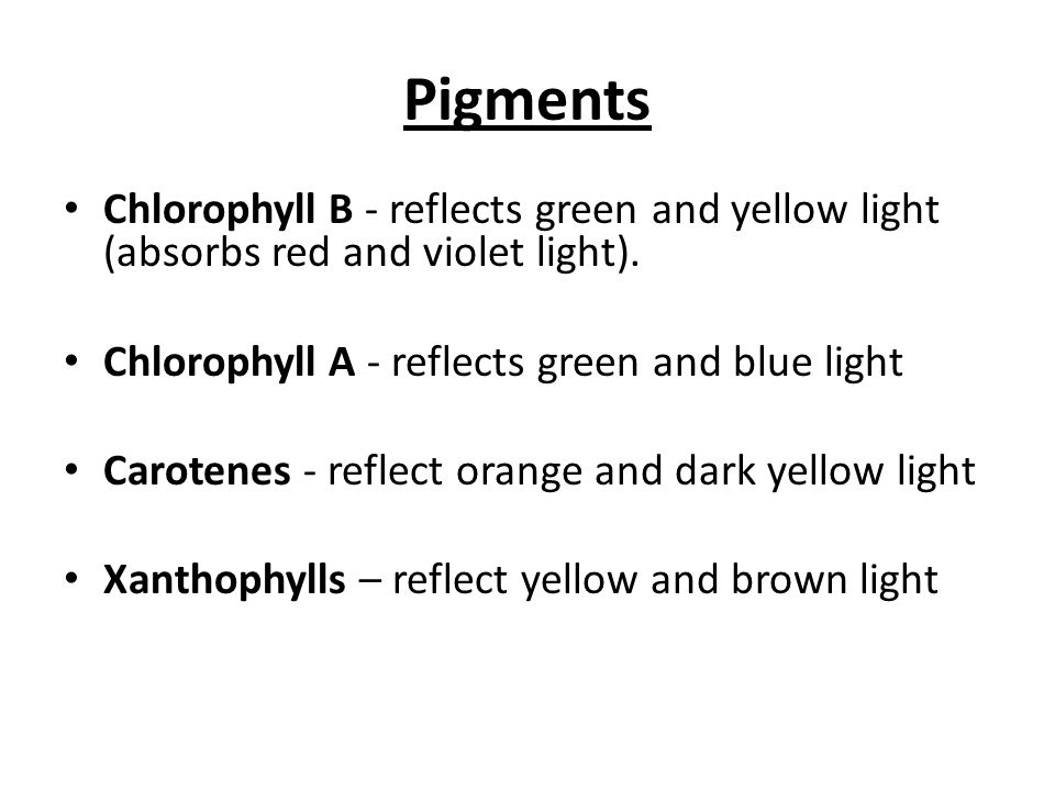 Pigments Chlorophyll B - reflects green and yellow light (absorbs red and violet light).