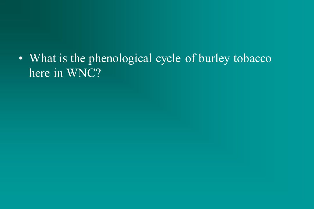 What is the phenological cycle of burley tobacco here in WNC