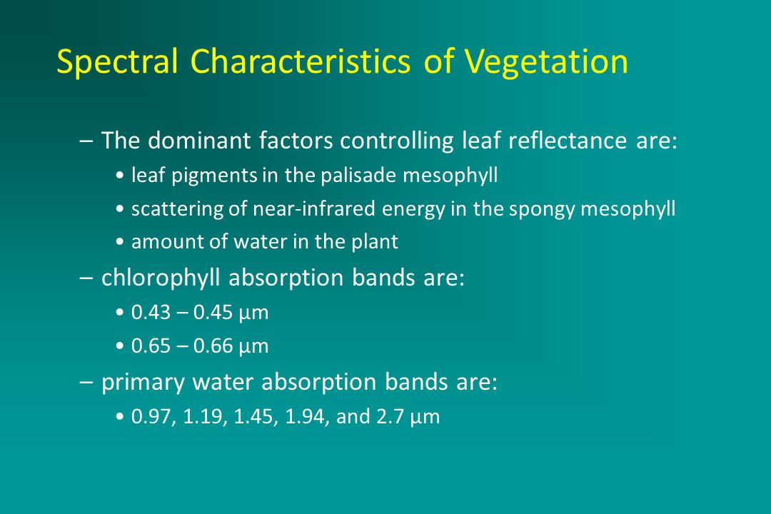 Active Remote Sensing Systems –The dominant factors controlling leaf reflectance are: leaf pigments in the palisade mesophyll scattering of near-infrared energy in the spongy mesophyll amount of water in the plant –chlorophyll absorption bands are: 0.43 – 0.45 μm 0.65 – 0.66 μm –primary water absorption bands are: 0.97, 1.19, 1.45, 1.94, and 2.7 μm Spectral Characteristics of Vegetation