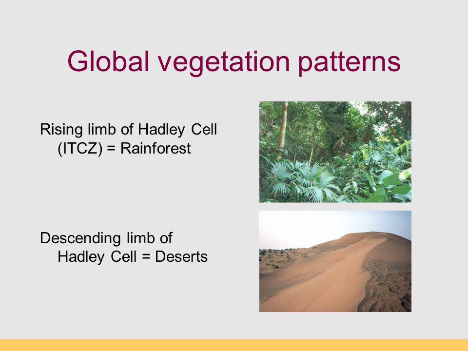 Global vegetation patterns Rising limb of Hadley Cell (ITCZ) = Rainforest Descending limb of Hadley Cell = Deserts