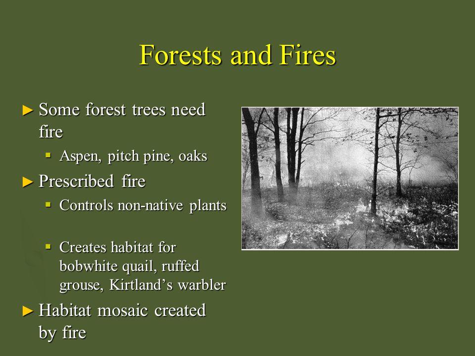 eastern deciduous forest yahner richard h