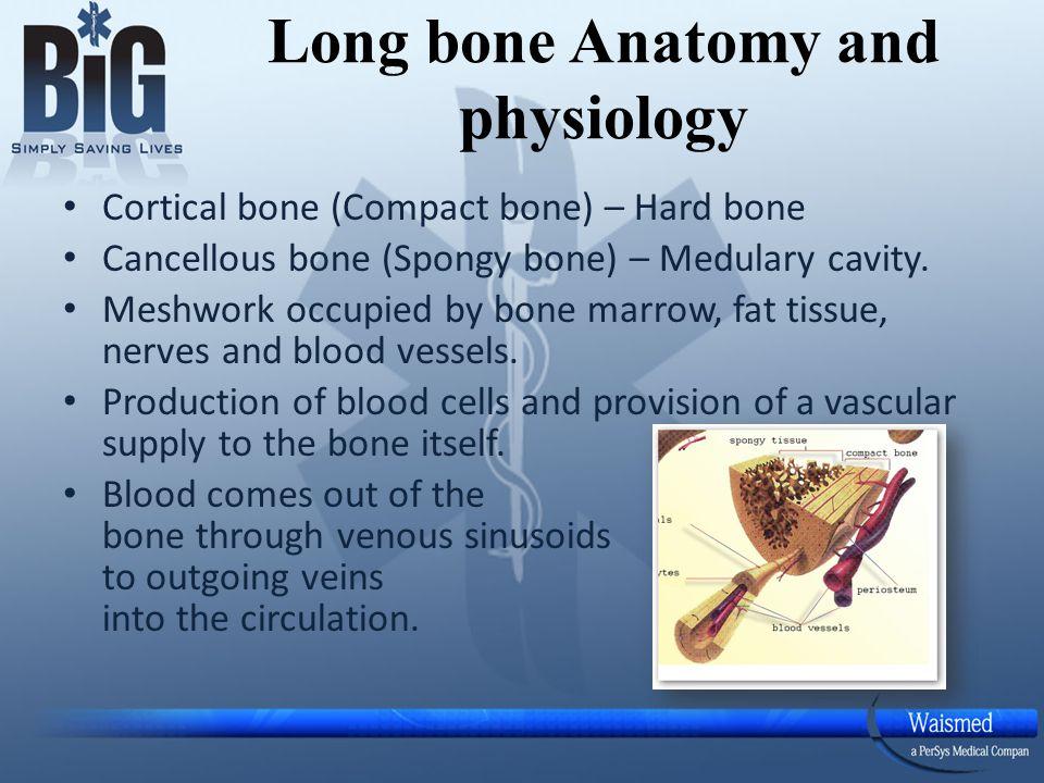 Long bone Anatomy and physiology Cortical bone (Compact bone) – Hard ...