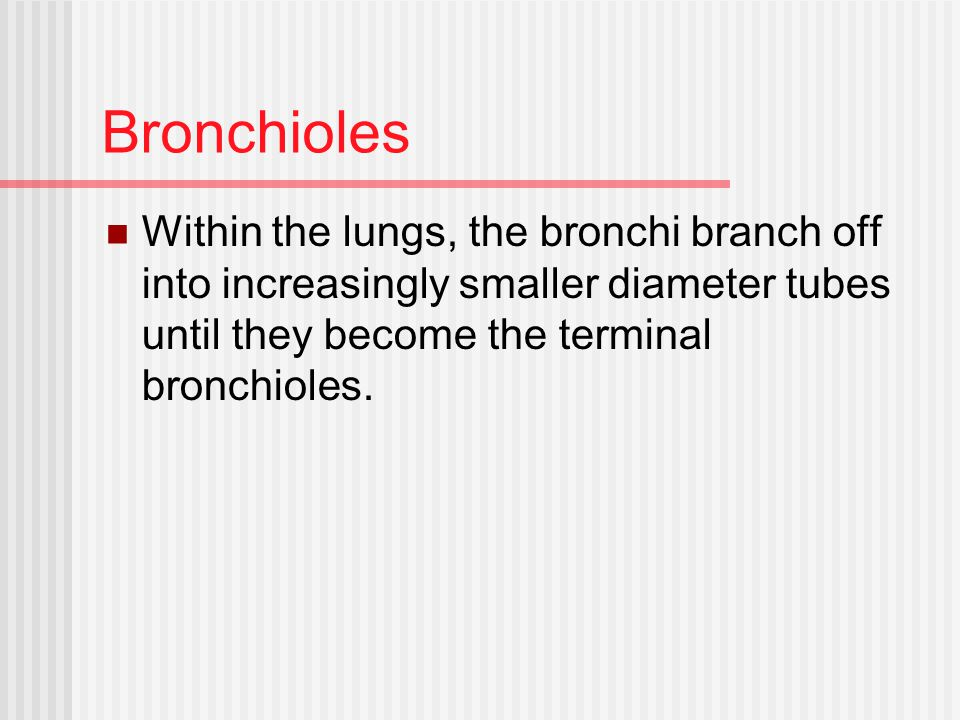 Bronchioles Within the lungs, the bronchi branch off into increasingly smaller diameter tubes until they become the terminal bronchioles.