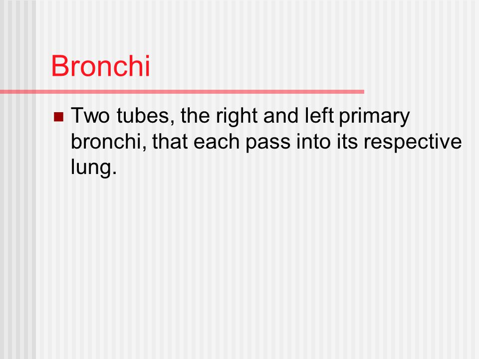Bronchi Two tubes, the right and left primary bronchi, that each pass into its respective lung.