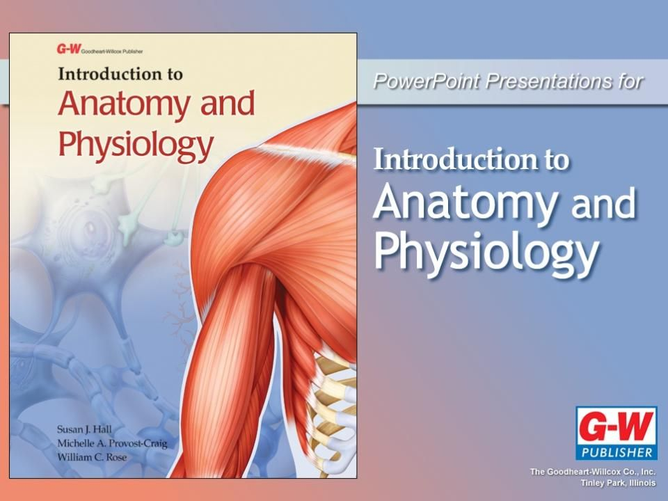 1 Foundations Of Human Anatomy And Physiology Ppt Video Online