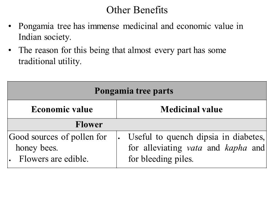 Pongamia Pinnata as a Bio-energy Resource P M V Subbarao Professor