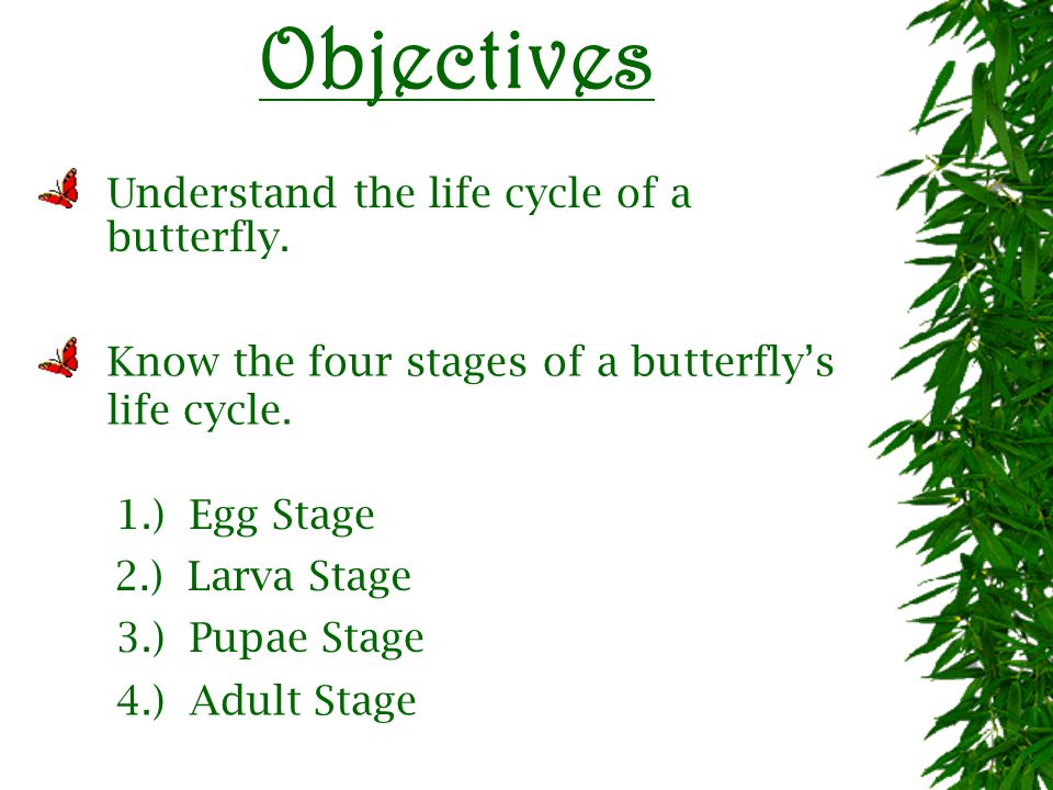 A Butterfly s Life Cycle
