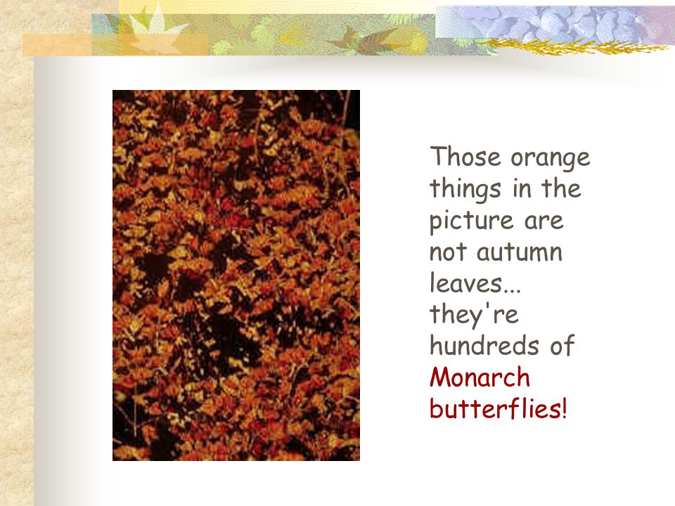 Those orange things in the picture are not autumn leaves...