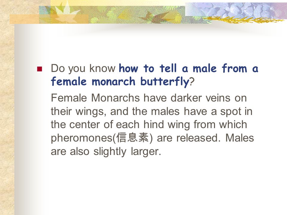 Do you know how to tell a male from a female monarch butterfly.