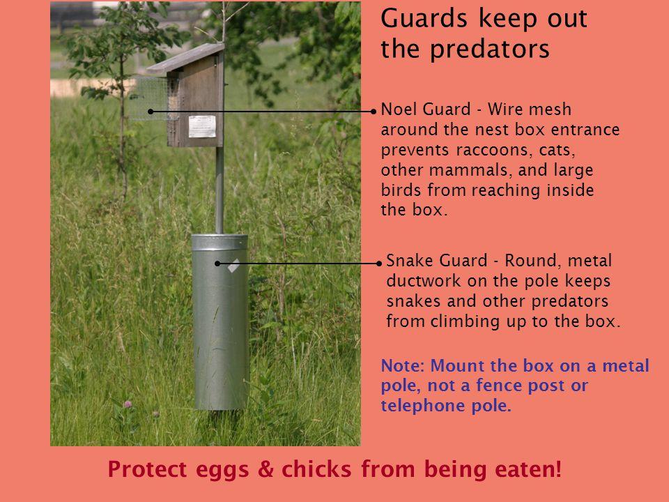 What makes a good bluebird nest box? Wood box on metal pole Floor
