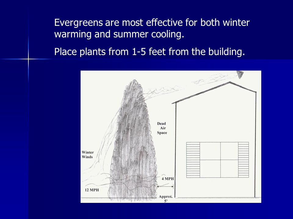 Evergreens are most effective for both winter warming and summer cooling.
