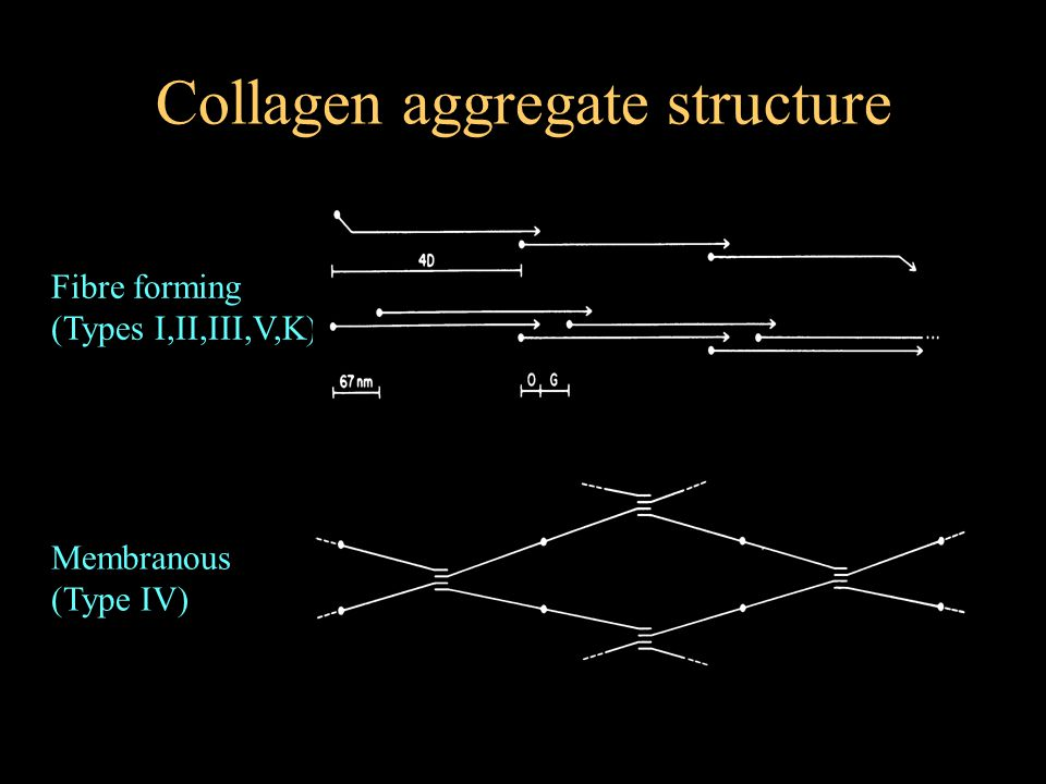 Collagen aggregate structure Fibre forming (Types I,II,III,V,K) Membranous (Type IV)