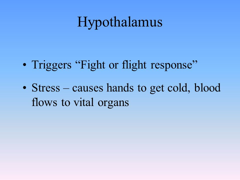 Hypothalamus Triggers Fight or flight response Stress – causes hands to get cold, blood flows to vital organs