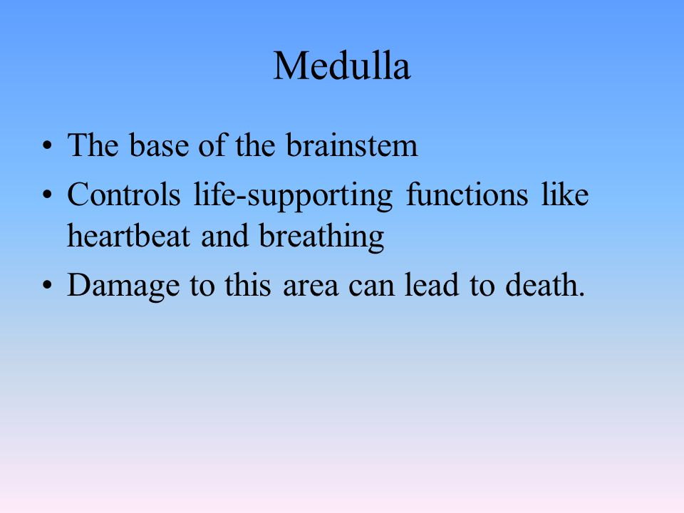 Medulla The base of the brainstem Controls life-supporting functions like heartbeat and breathing Damage to this area can lead to death.
