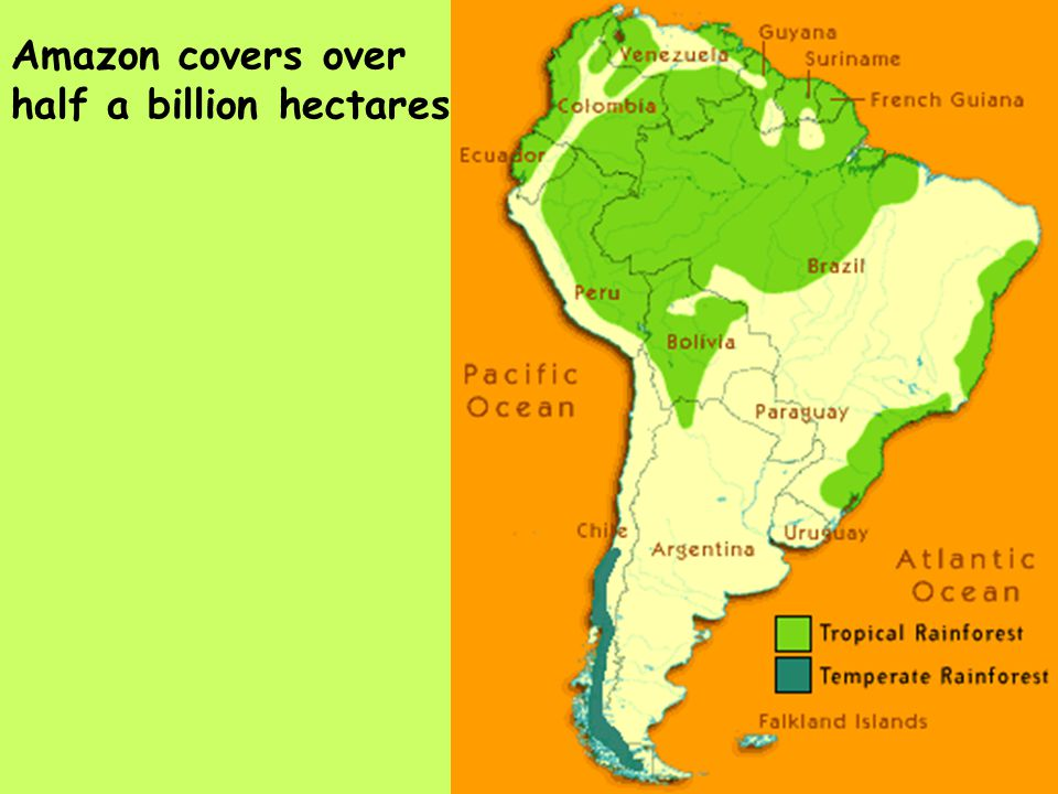 Amazon rainforest and fire tropical rainforests cover 7 percent of 3 amazon gumiabroncs Images