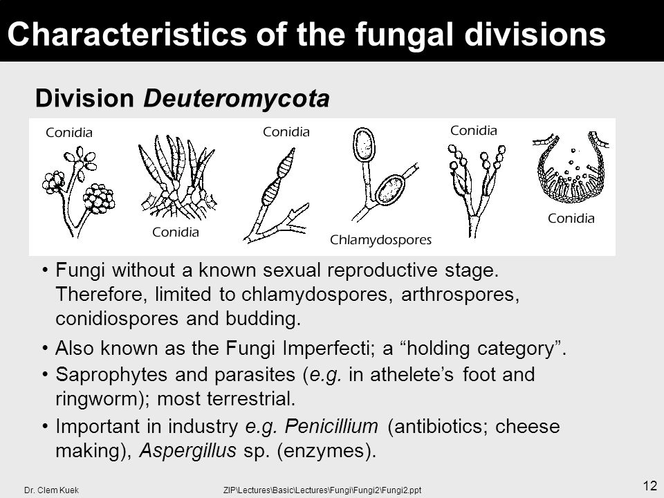 Arthrospores asexual and sexual reproduction