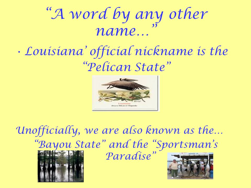 Louisiana State Symbols Background Information Louisianas State
