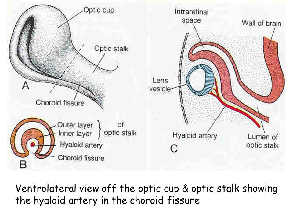 Jittipan Chavadej Phd Anatomy Departmentfac Of Science Mahidol