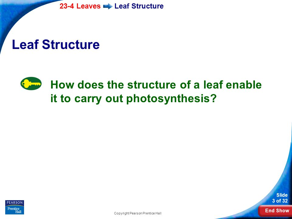 End Show 23-4 Leaves Slide 3 of 32 Copyright Pearson Prentice Hall Leaf Structure How does the structure of a leaf enable it to carry out photosynthesis