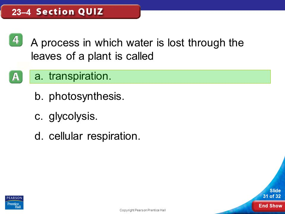 End Show Slide 31 of 32 Copyright Pearson Prentice Hall 23–4 A process in which water is lost through the leaves of a plant is called a.transpiration.